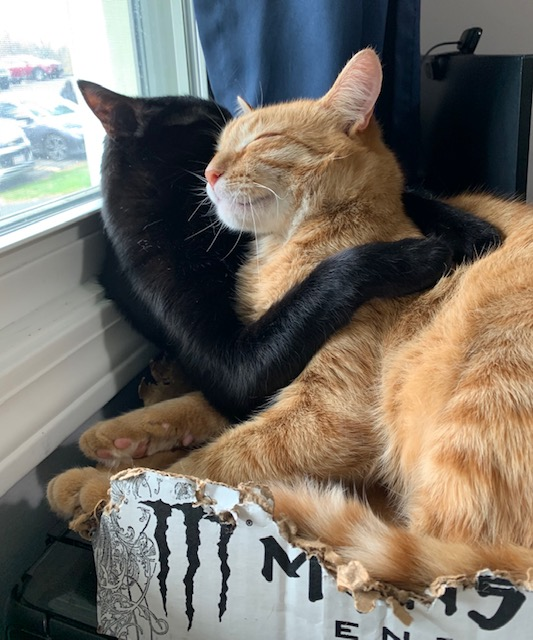 Two cats wedged into a destroyed Monster Energy drink box. The black cat has both front paws around the orange tiger cat's neck and shoulders. They have their faces pressed together.